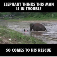 Life-saving swim trunks.: ELEPHANT THINKS THIS MAN  IS IN TROUBLE  SO COMES TO HIS RESCUE Life-saving swim trunks.
