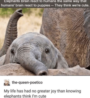 Who cares if the hoe in Freshman Year doesn't find you cute by fatehpuria92 FOLLOW HERE 4 MORE MEMES.: Elephants Brain react to humans the same way that  humans' brain react to puppies-They think we're cute.  the-queen-poetico  My life has had no greater joy than knowing  elephants think l'm cute Who cares if the hoe in Freshman Year doesn't find you cute by fatehpuria92 FOLLOW HERE 4 MORE MEMES.