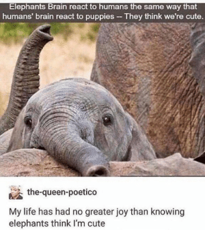 Where do I sign to be adopted by an elephant? https://t.co/X5hgHJ6G14: Elephants Brain react to humans the same way that  humans' brain react to puppies - They think we're cute.  the-queen-poetico  My life has had no greater joy than knowing  elephants think I'm cute Where do I sign to be adopted by an elephant? https://t.co/X5hgHJ6G14