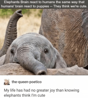 : Elephants Brain react to humans the same way that  humans' brain react to puppies - They think we're cute.  the-queen-poetico  My life has had no greater joy than knowing  elephants think I'm cute
