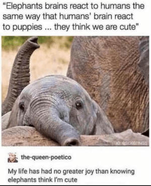 "This is very Noice: ""Elephants brains react to humans the  same way that humans' brain react  to puppies .. they think we are cute""  IG QSEXISTINGS  the-queen-poetico  My life has had no greater joy than knowing  elephants think I'm cute This is very Noice"