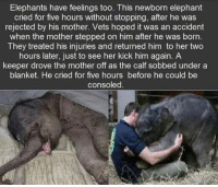 Animals have feelings too.: Elephants have feelings too. This newborn elephant  cried for five hours without stopping, after he was  rejected by his mother. Vets hoped it was an accident  when the mother stepped on him after he was born  They treated his injuries and returned him to her two  hours later, just to see her kick him again. A  keeper drove the mother off as the calf sobbed under a  blanket. He cried for five hours before he could be  consoled Animals have feelings too.