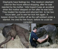 True, Elephant, and Elephants: Elephants have feelings too. This newborn elephant  cried for five hours without stopping, after he was  rejected by his mother. Vets hoped it was an accident  when the mother stepped on him after he was born  They treated his injuries and returned him to her two  hours later, just to see her kick him again. A  keeper drove the mother off as the calf sobbed under a  blanket. He cried for five hours before he could be  consoled. Is that true?