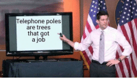 Poles: elephone poles  are trees  that got  a job