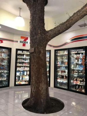 This 711 in Mexico was built around a tree: ELEVEN  CERVEZA INDIVIDUAL This 711 in Mexico was built around a tree