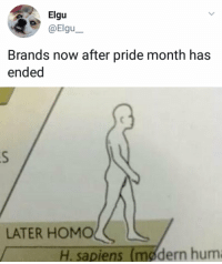 Pride, Hum, and Now: Elgu  Brands now after pride month has  ended   LATER HOMOL  H. sapiens (mødern hum