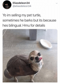Yo, Turtle, and Hmu: Eliasdeleon34  @eliasdeleon34  Yo im selling my pet turtle,  sometimes he barks but its because  hes bilingual. Hmu for details Somebody want a turtle?