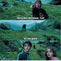 Hermione, Memes, and Run: eLifeofAWeasleylifG  Harry and Hermione, run!  It's the grim! Ron's such a drama queen I love him. Describe your day in one word :) HarryPotter ThePrisonerOfAzkaban