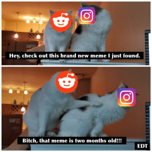 Bitch, Meme, and Memes: ELIS  Hey, check out this brand new meme I just found.  Bitch, that meme is two months old!!!  EDT Thou shalt not covet thy neighbors memes.