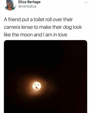 Animals, Dogs, and Love: Eliza Berlage  @verbaliza  A friend put a toilet roll over their  camera lense to make their dog look  like the moon and l am in love Dog Memes Of The Day 30 Pics – Ep53 #animalmemes #dogmemes #memes #dogs - Lovely Animals World