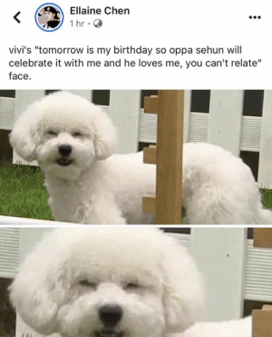 "EXO memes: Ellaine Chen  1 hr  vivi's ""tomorrow is my birthday  celebrate it with me and he loves me, you can't relate""  face  so oppa sehun will EXO memes"