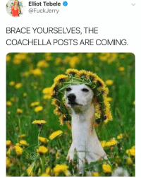 Beyonce, Coachella, and Funny: Elliot  Tebele  @FuckJerry  BRACE YOURSELVES, THE  COACHELLA POSTS ARE COMING Just like fuck me up this year guys. More Beyoncé posts the better. I want every single perspective.
