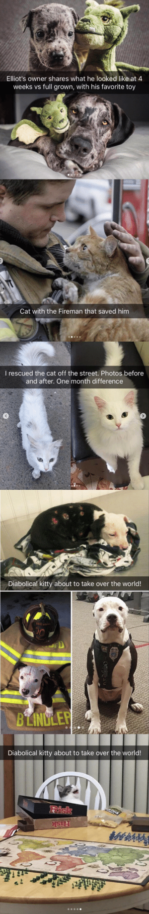 babyanimalgifs: Animal snaps  (DM for credits) (#1 @mygiantadventures) : Elliot's owner shares what he looked like at 4  weeks vs full grown, with his favorite toy   Cat with the Fireman that saved him   I rescued the cat off the street. Photos before  and after. One month difference   Diabolical kitty about to take over the world!  BLINULEP   Diabolical kitty about to take over the world!  Risk babyanimalgifs: Animal snaps  (DM for credits) (#1 @mygiantadventures)