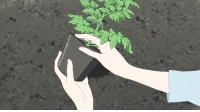 Anime, Children, and Comfortable: elphabaforpresidentofgallifrey:  doctorianmalcolm:  gracejerksit:  WHAT THE SHIT THIS IS NOT HOW YOU PLANT A POTTED PLANT YOU ARE SUPPOSED TO TEASE THE FUCKING ROOTS AND PROVIDE A COMFORTABLE SPACE WITH SOFT SOIL AROUND IT TO ENSURE THAT IT GROWS PROPERLY IF YOU PLANT THIS THING LIKE THIS IT'LL PROBABLY DIE WITHIN THE YEAR YOU'RE A SHITTER ANIME IS SHIT 2K14  this is from wolf children. and she's ignorant about farming. and the plants all do die and wilt until local farmers teach her how to plant them properly. calm down 2k14.  unrest in the farming fandom