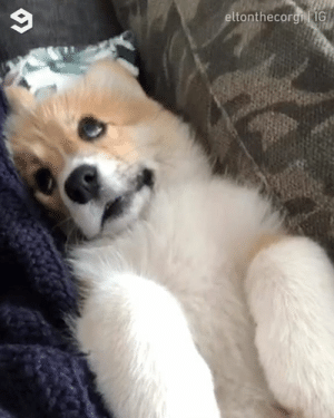 Me having no clue what I'm doing with my life  By eltonthecorgi | IG: eltonthecorgi G Me having no clue what I'm doing with my life  By eltonthecorgi | IG