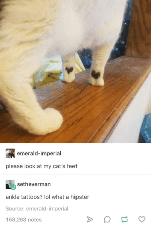 Cats, Hipster, and Lol: emerald-imperial  please look at my cat's feet  setheverman  ankle tattoos? lol what a hipster  Source: emerald-imperial  158,263 notes 🖤🐾🖤