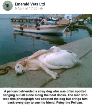 Wholesome pelican: Emerald Vets Ltd  6 April at 17:00 · e  A pelican befriended a stray dog who was often spotted  hanging out all alone along the boat docks. The man who  took this photograph has adopted the dog but brings him  back every day to see his friend, Petey the Pelican. Wholesome pelican