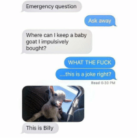 Funny, Ted, and Goat: Emergency question  Ask away  Where can I keep a baby  goat impulsively  bought?  WHAT THE FUCK  this is a joke right?  Read 6:30 PM  This is Billy I want a baby goat (@hilarious.ted)