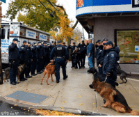 The New York Police Department gathered about 20 saluting officers and held an aviation flyover to honor an Emergency Services K-9 just before she died Monday. Angel, the 5-year-old bloodhound, was reportedly diagnosed with cancer in August.: EMERGENCY  SERVICE  RUCK F  MERGEN  SERVIC  50  NYPD via AP The New York Police Department gathered about 20 saluting officers and held an aviation flyover to honor an Emergency Services K-9 just before she died Monday. Angel, the 5-year-old bloodhound, was reportedly diagnosed with cancer in August.