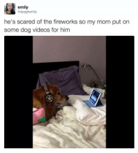 Memes, Videos, and Fireworks: emily  @spaghemily  he's scared of the fireworks so my mom put on  some dog videos for him