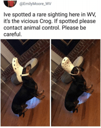 Memes, Control, and Animal: @EmilyMoore_WV  Ive spotted a rare sighting here in WV,  it's the vicious Crog. If spotted please  contact animal control. Please be  careful. Very dangerously. | Follow @aranjevi for more!
