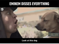 Bad, Dank, and Eminem: EMINEM DISSES EVERYTHING  Brent Pella  Look at this dog Is it bad that I kinda wanna get dissed by Brent Pella now?