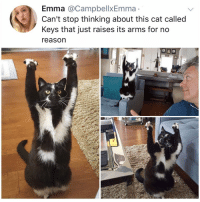 Memes, Hell, and Reason: Emma @CampbellxEmma  Can't stop thinking about this cat called  Keys that just raises its arms for no  reason Post 1221: y the hell arent u following @kalesaladanimals yet