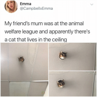 Y the hell arent u following @kalesaladanimals yet: Emma  @CampbellxEmma  My friend's mum was at the animal  welfare league and apparently there's  a cat that lives in the ceiling Y the hell arent u following @kalesaladanimals yet