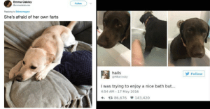 Hilarious Dog Tweets To Counteract All The Spooky Crap: Emma Oakley  Gemmalalalouise  Follow  Replying to @drewmagary  She's afraid of her own farts  hails  HBarinsky  Follow  I was trying to enjoy a nice bath but...  4:54 AM 17 May 2016  t 86,676 143,420 Hilarious Dog Tweets To Counteract All The Spooky Crap