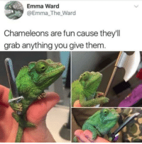 Fun, Emma, and Them: Emma Ward  @Emma_The_Ward  Chameleons are fun cause they'll  grab anything you give them <p>Chameleons hold anything.</p>