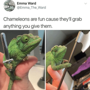 Cum, Tumblr, and Blog: Emma Ward  @Emma_The_Ward  Chameleons are fun cause they'll grab  anything you give them cum-vaper:Cursed undead… it is now time to rekindle the flame