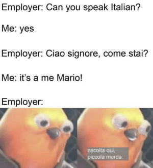 srsfunny:  Mr. Worldwide: Employer: Can you speak Italian?  Me: yes  Employer: Ciao signore, come stai?  Me: it's a me Mario!  Employer:  ascolta qui,  piccola merda. srsfunny:  Mr. Worldwide
