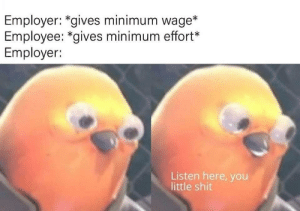 Shit, Minimum Wage, and You: Employer: *gives minimum wage*  Employee: *gives minimum effort*  Employer:  Listen here, you  little shit Minimal stonks