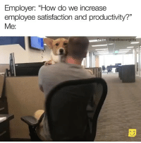 "Funny, How, and Satisfaction: Employer: ""How do we increase  employee satisfaction and productivity?""  Me:  t: @apolloscorgilife Are you hiring😍😍😍 VidVia @apolloscorgilife"