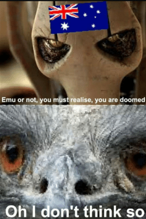 Australia, War, and Emu: Emu or not, you must realise, you are doomed  Oh I don't think so Australia declaring war on the the Emus (1932)