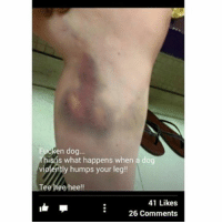 TEE HEE HEE: en dog  his is what happens when a do  violently humps your leg!  Tee hee hee  41 Likes  26 Comments TEE HEE HEE