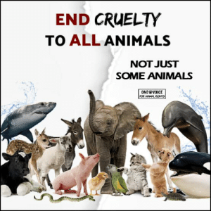 Cruelty: END CRUELTY  TO ALL ANIMALS  NOT JUST  SOME ANIMALS  ONE VOICE