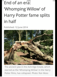 """Memes, Film, and 🤖: End of an era  PM  20%  """"Whomping Willow' of  Harry Potter fame splits  in half  Published: 12 June 2014  The ancient yew in the Ashridge Estate, which  starred as the """"Whomping Willow"""" in the Harry  Potter films, has collapsed. Photo: Ron Moss ~Dobby"""