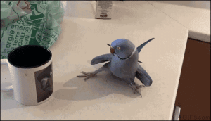 Crush, Energy, and Love: energy 4gifs:  Darwin, an Indian ringneck parakeet, gets a crush on the bird on the coffee mug. [video]