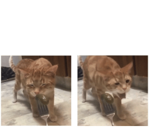 Enjoy this gagging cat meme template. I find it adorable then funny: Enjoy this gagging cat meme template. I find it adorable then funny