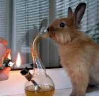 Bunnies, Dank, and Easter: enjoy your fucking easter break the easter bunny sure is