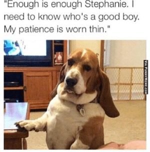 """Hilarious Dog Memes Every Dog Gets: Enough is enough Stephanie.  need to know who's a good boy.  My patience is worn thin."""" Hilarious Dog Memes Every Dog Gets"""