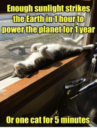 Cute, Memes, and Earth: Enough sunlight strikes  the Earth in hour to  power the planet for year  or one catfor 5 minutes For more cute pics LIKE us at The Purrfect Feline Page