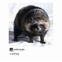 a Good Poof - Max textpost textposts: entain-pugly  A soft boy a Good Poof - Max textpost textposts