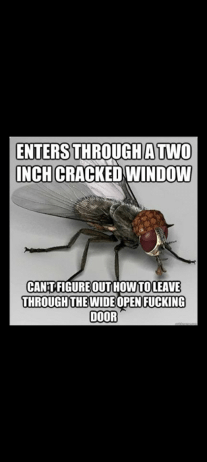 C'mon man: ENTERS THROUGHATWO  INCH CRACKED WINDOW  CANT FIGURE OUT HOW TOLEAVE  THROUGH THE WIDE 0PENFUCKING  DOOR  noam C'mon man
