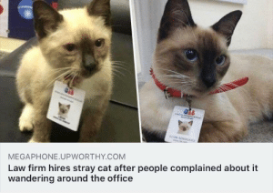Cutest thing ever: EON ADVOGATO  AL  Law firm hires stray cat after people complained about it  wandering around the office  MEGAPHONE.UPWORTHY.COM Cutest thing ever