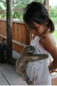 epicjohndoe:  Baby Sloth Hugs Girl: epicjohndoe:  Baby Sloth Hugs Girl