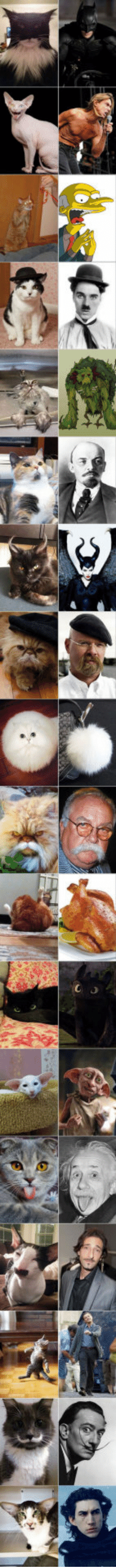 Cats, Tumblr, and Blog: epicjohndoe:  Cats That Look Like Something Else