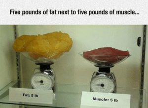 epicjohndoe:  Fat Vs. Muscle Tissue: epicjohndoe:  Fat Vs. Muscle Tissue