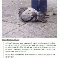 All the Time, Sat, and Step: er-na  buttmunch  so there's a pigeon i used to pass by in my old neighborhood all the time  and he was really fat because people would just toss him food and literally  he sat in the middle of the sidewalk and people would just step over him,  he wouldn't even flinch. Seriously you could sit down next to him and just  feed him and he would be chill.  he was there every day and all us locals would affectionately refer to him  as 'lard-ass' TOUCHING STORY Twitter dank_meme5 meme dank dankmemes funny piegon bird birb relatable
